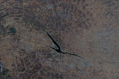Struttura del ceppo di albero Fotografia Stock Libera da Diritti