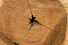 Struttura del ceppo di albero Fotografie Stock Libere da Diritti