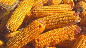Struttura del cereale Fotografia Stock