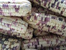 Struttura del cereale Immagini Stock