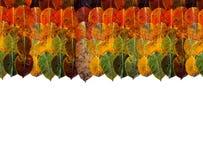 Struttura del confine delle foglie di autunno sulla cima pendenza dell'arcobaleno dalla bugia verde marrone giallo arancione su a immagine stock libera da diritti