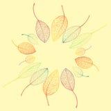 Struttura del confine delle foglie di autunno variopinte Immagine Stock
