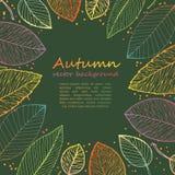 Struttura del confine delle foglie di autunno variopinte Fotografia Stock Libera da Diritti
