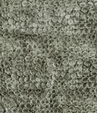 Struttura del cuoio del serpente del primo piano Fotografia Stock