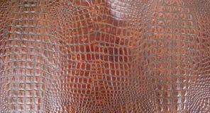 Struttura del cuoio dell'alligatore impressa Brown del cognac Fotografia Stock Libera da Diritti