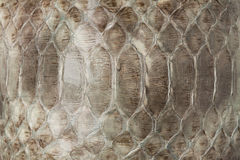 Struttura del cuoio della pelle di serpente Fotografia Stock