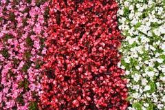 Struttura del fiore Fotografia Stock Libera da Diritti