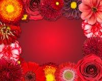Struttura del fiore con i fiori rossi su fondo porpora Immagini Stock Libere da Diritti