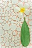 Struttura del fiore del Frangipani Immagini Stock