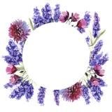 Struttura del fiore della lavanda del Wildflower in uno stile dell'acquerello isolata Immagine Stock Libera da Diritti