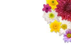 struttura del fiore di disposizione Fotografia Stock Libera da Diritti