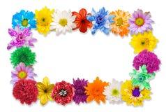 Struttura del fiore di disposizione su bianco Fotografia Stock Libera da Diritti