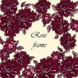 Struttura del fiore di Rosa Immagini Stock Libere da Diritti