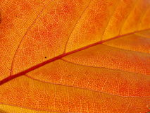 Struttura del foglio di autunno Immagine Stock