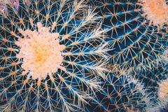 Struttura del fondo del cactus immagine stock libera da diritti