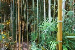 Struttura del fondo dei gambi di bambù e dello spazio verde in priorità alta Immagine Stock