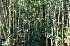 Struttura del fondo dei gambi di bambù e dello spazio verde in priorità alta Immagine Stock Libera da Diritti