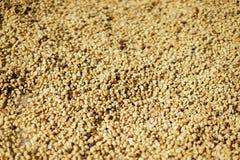 Struttura del fondo del seme del caffè immagine stock