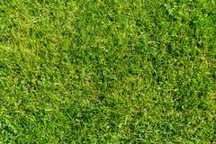 Struttura del fondo dell'erba Fotografia Stock Libera da Diritti