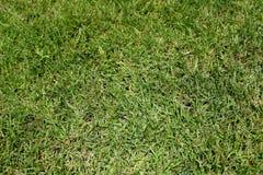 Struttura del fondo dell'erba Fotografia Stock