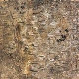 Struttura del fondo della corteccia di betulla Fotografia Stock Libera da Diritti