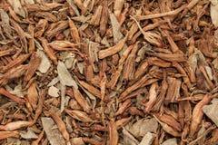 Struttura del fondo della fiamma Bush organica (Woodfordia Fruticosa) del fuoco Fotografia Stock