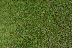 Struttura del fondo della natura dell'erba verde Immagine Stock Libera da Diritti