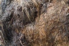 Struttura del fondo di erba secca, di fieno o di paglia Fotografie Stock Libere da Diritti