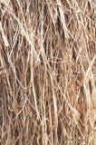 Struttura del fondo di fieno asciutto Fotografia Stock Libera da Diritti