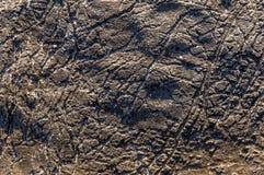 Struttura del fondo di struttura della pietra del mare Immagine Stock