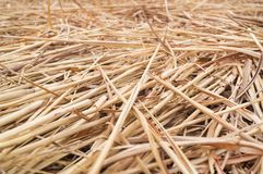 Struttura del fondo del fieno o della paglia o dell'erba asciutta Immagine Stock Libera da Diritti