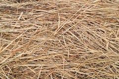 Struttura del fondo del fieno o della paglia o dell'erba asciutta Immagini Stock