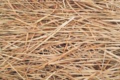 Struttura del fondo del fieno o della paglia o dell'erba asciutta Fotografia Stock