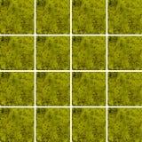Struttura del frullato del kiwi dentro le forme quadrate sistemate come fondo Fotografia Stock Libera da Diritti