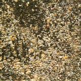 Struttura del gesso del cemento Fotografia Stock Libera da Diritti