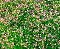 Struttura del giardino Fotografia Stock