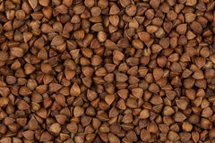 Struttura del grano saraceno Fotografia Stock Libera da Diritti
