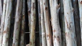 Struttura del legname Immagini Stock