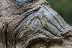 Struttura del legno della corteccia Fotografia Stock Libera da Diritti