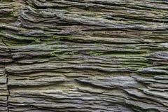 Struttura del modello di vecchio ceppo Fotografie Stock