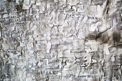 Struttura del muro di cemento Fotografie Stock Libere da Diritti