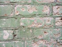 Struttura del muro di mattoni dei fiori verdi, vecchio fondo fotografia stock