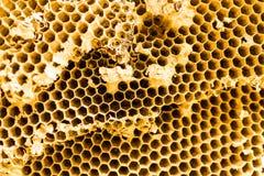 Struttura del nido dell'ape Fotografie Stock