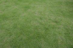 Struttura del pavimento del tappeto erboso dell'erba verde Fotografia Stock