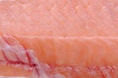 Struttura del pesce Fotografia Stock