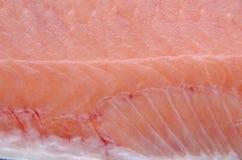 Struttura del pesce Immagine Stock