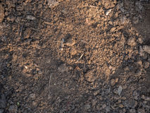 Struttura del primo piano asciutto dell'humus Suolo coltivato, terra della sporcizia, fondo marrone della terra Agricoltura biolo Immagine Stock Libera da Diritti