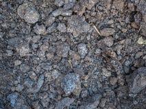 Struttura del primo piano asciutto dell'humus Suolo coltivato, terra della sporcizia, fondo marrone della terra Agricoltura biolo Immagini Stock Libere da Diritti