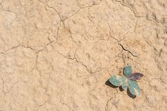 Struttura del primo piano della sabbia e del suolo asciutto Immagine Stock Libera da Diritti