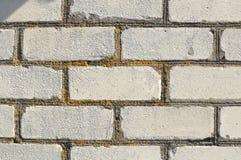 Struttura del primo piano del frammento di vecchio muro di mattoni bianco con le cuciture della costruzione coperte dal lichene g Immagini Stock